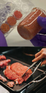 cell-cultured meat vs animal farmed meat