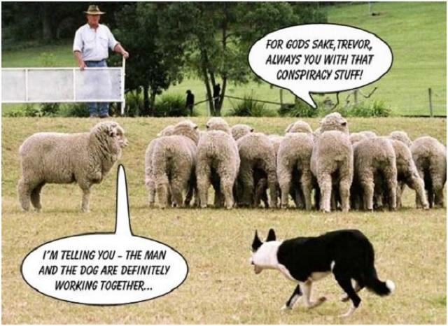 sheep conspiracy