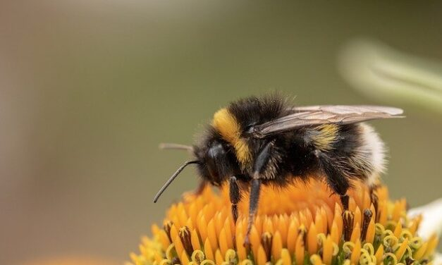 The Alarming Decline In Bee Populations – Factors and Consequences